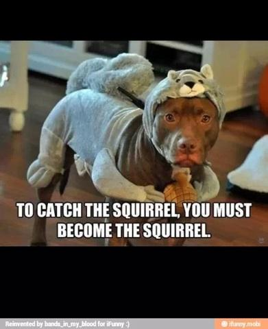 to catch a squirrel