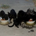 Welcome The Kitty Ranch's all night buffet
